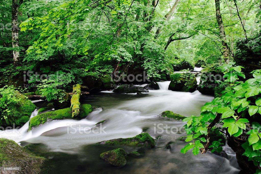 Spring Oirase Valley stock photo