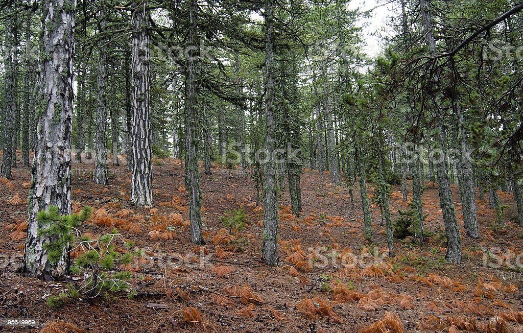 Spring on island Cyprus. Mountains Troodos. stock photo