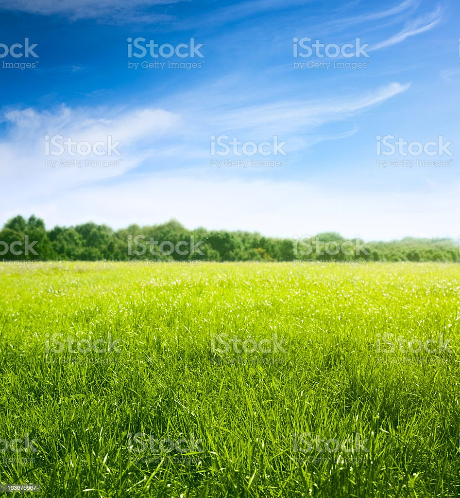 Spring on meadow. Fresh grass and beautiful clouds. stock photo