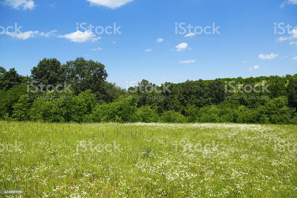 Spring on Meadow royalty-free stock photo