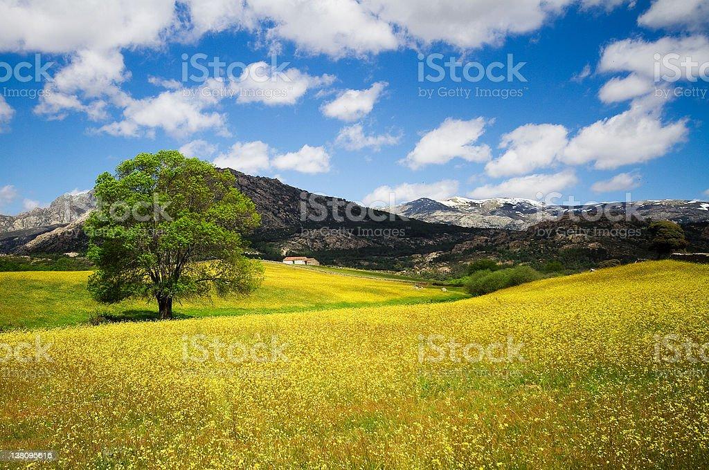 Spring on the Prairie royalty-free stock photo