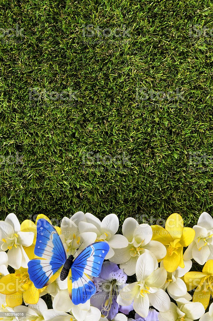 Spring or summer background with butterfly royalty-free stock photo