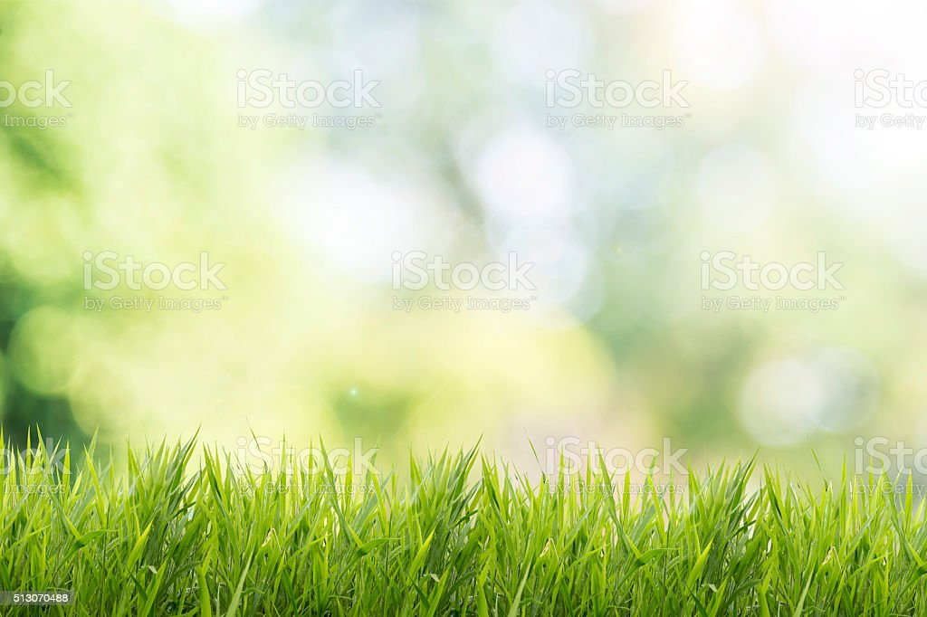 Spring or summer with grass field and nature green background stock photo