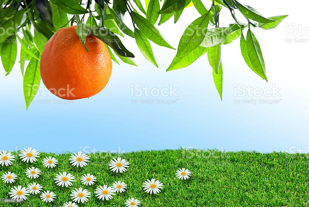 Spring Orange royalty-free stock photo