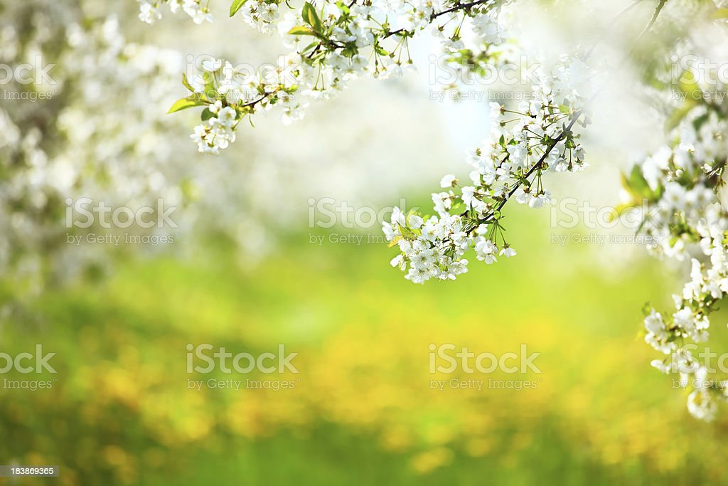 Spring orchard royalty-free stock photo