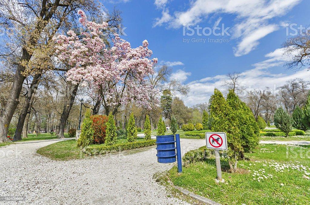 NO DOGS, spring outdoor park magnolia tree blosom royalty-free stock photo