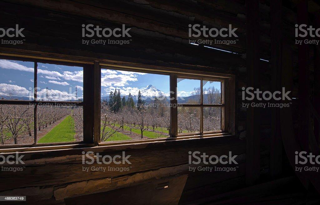 Primavera all'esterno della finestra della vecchia casa foto stock royalty-free