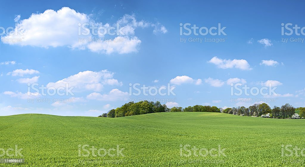 Spring panorama 38MPix XXXXL - meadow, blue sky, clouds stock photo