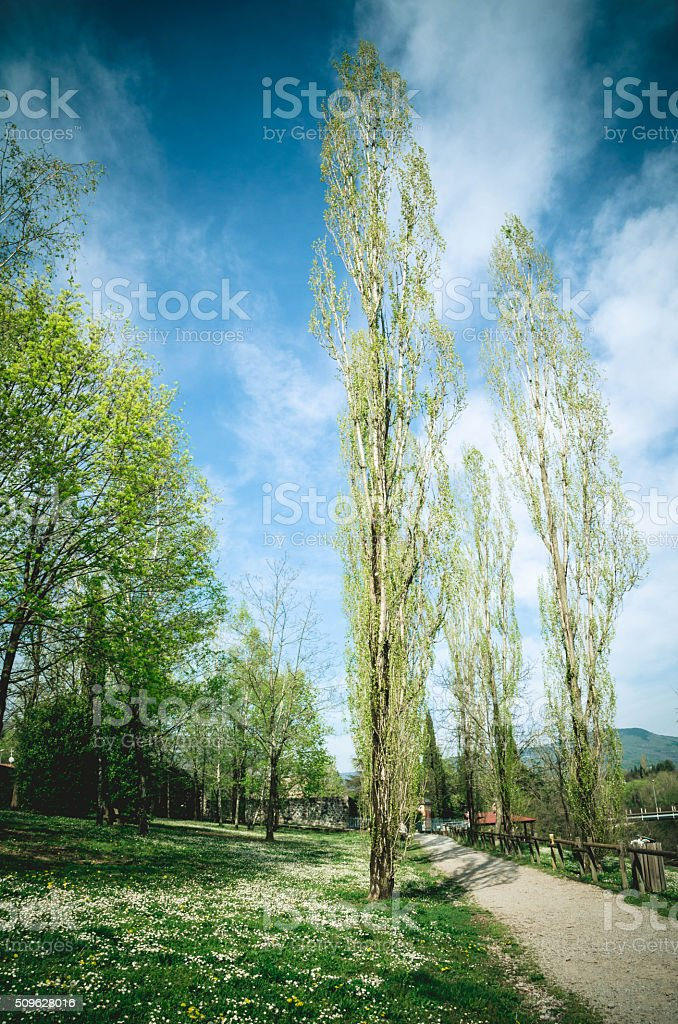 Spring park in Italy stock photo