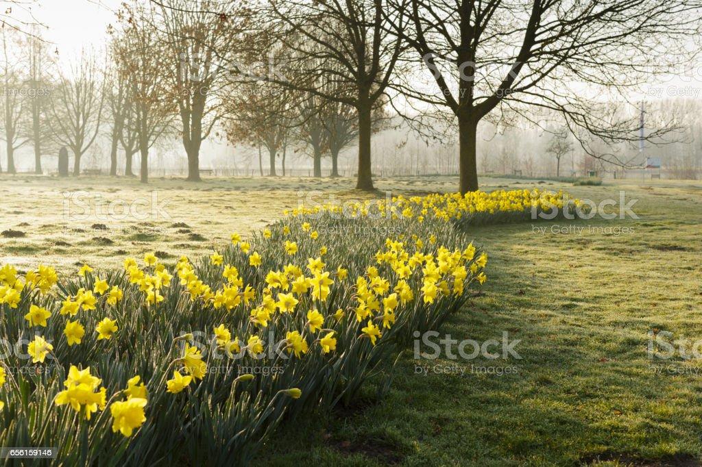 spring park sunrise stock photo
