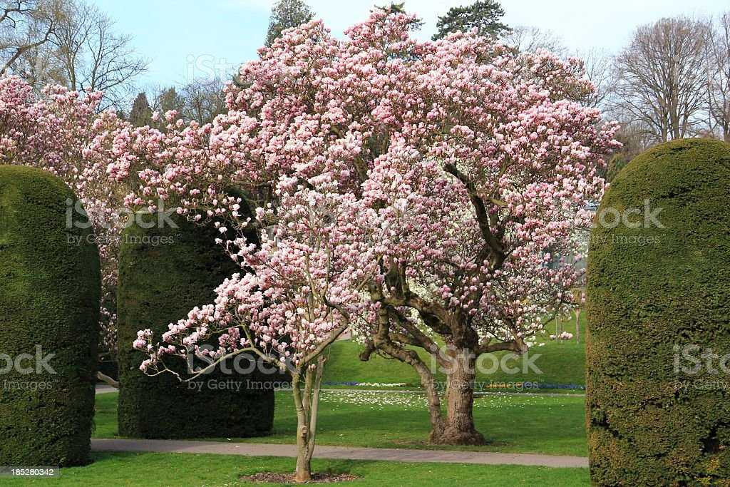 Spring park with magnolia trees stock photo