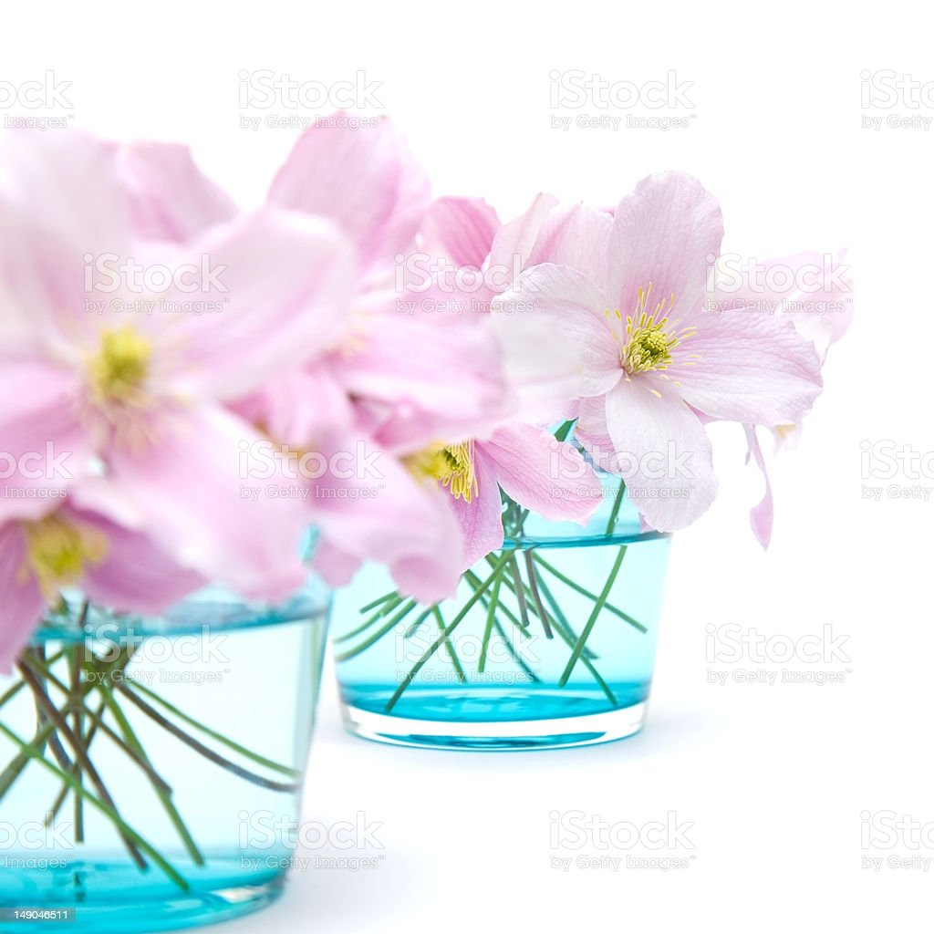 spring pastel royalty-free stock photo