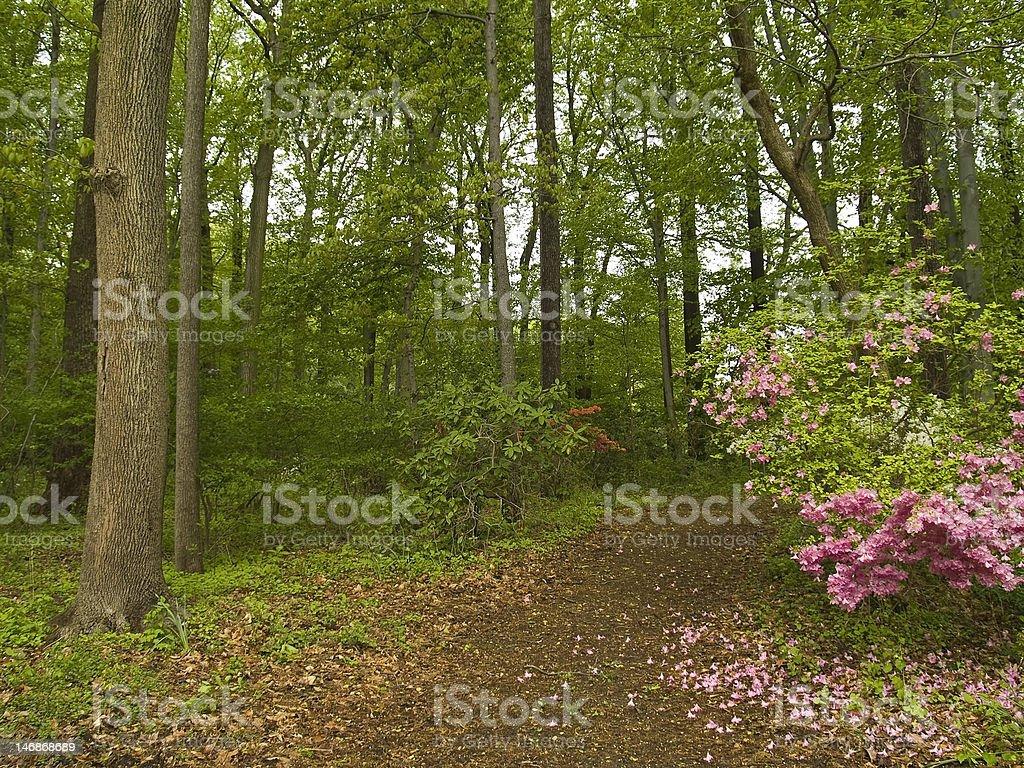 Spring Path royalty-free stock photo