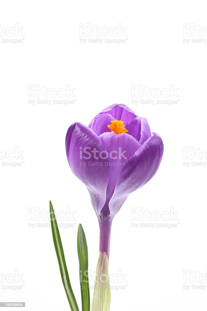 spring! royalty-free stock photo