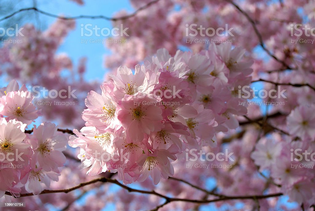 spring royalty-free stock photo