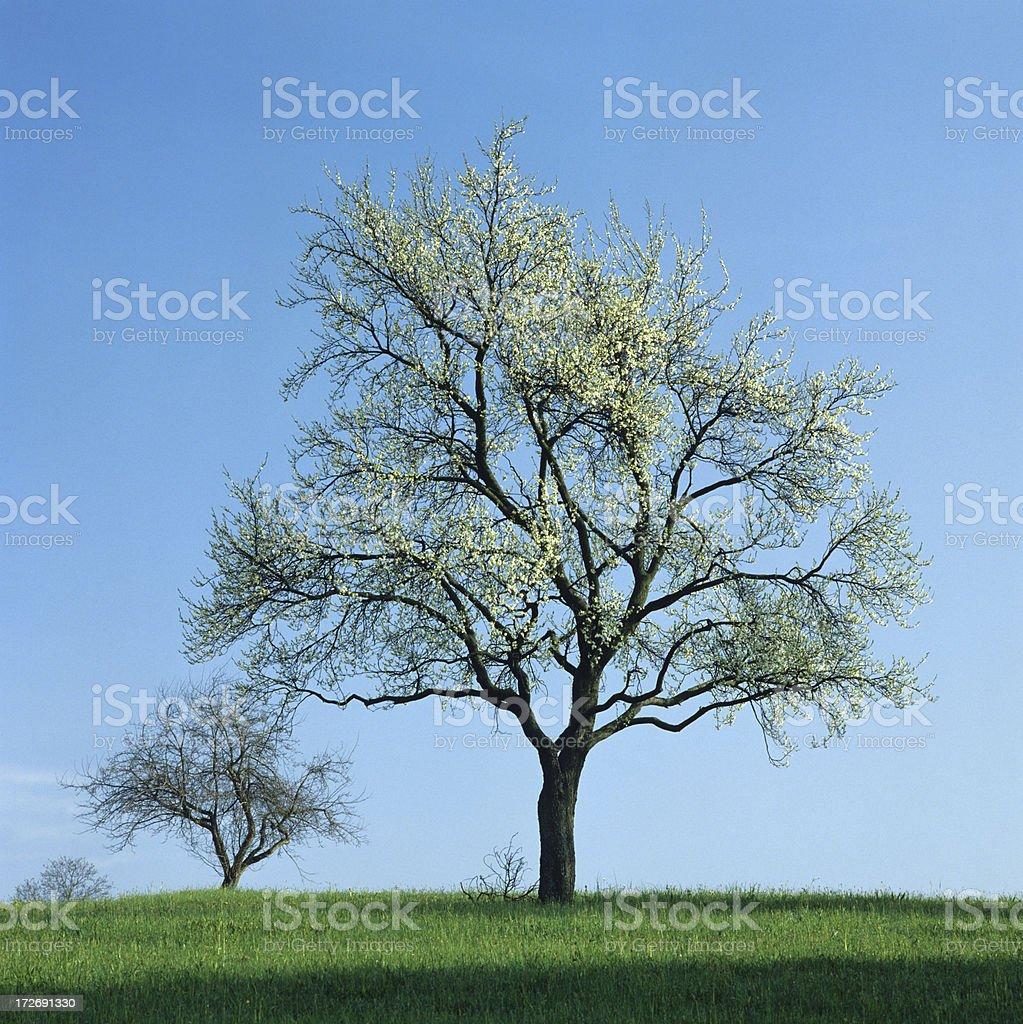 Spring   (image size XXXL) royalty-free stock photo
