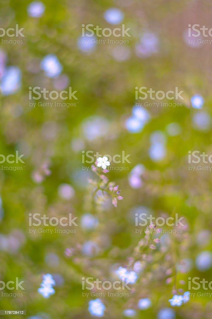 Den Frühling Lizenzfreies stock-foto