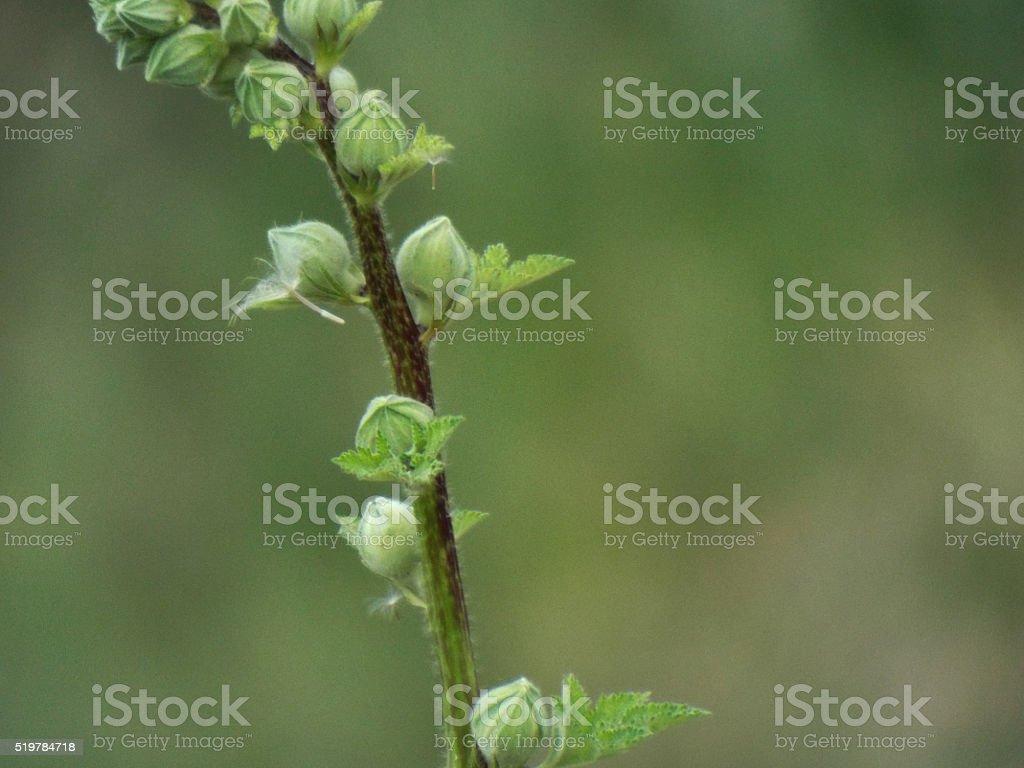 Le printemps photo libre de droits