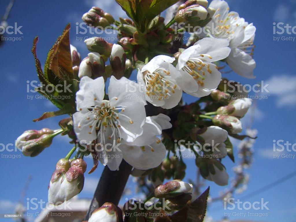 Primavera nos EUA foto royalty-free