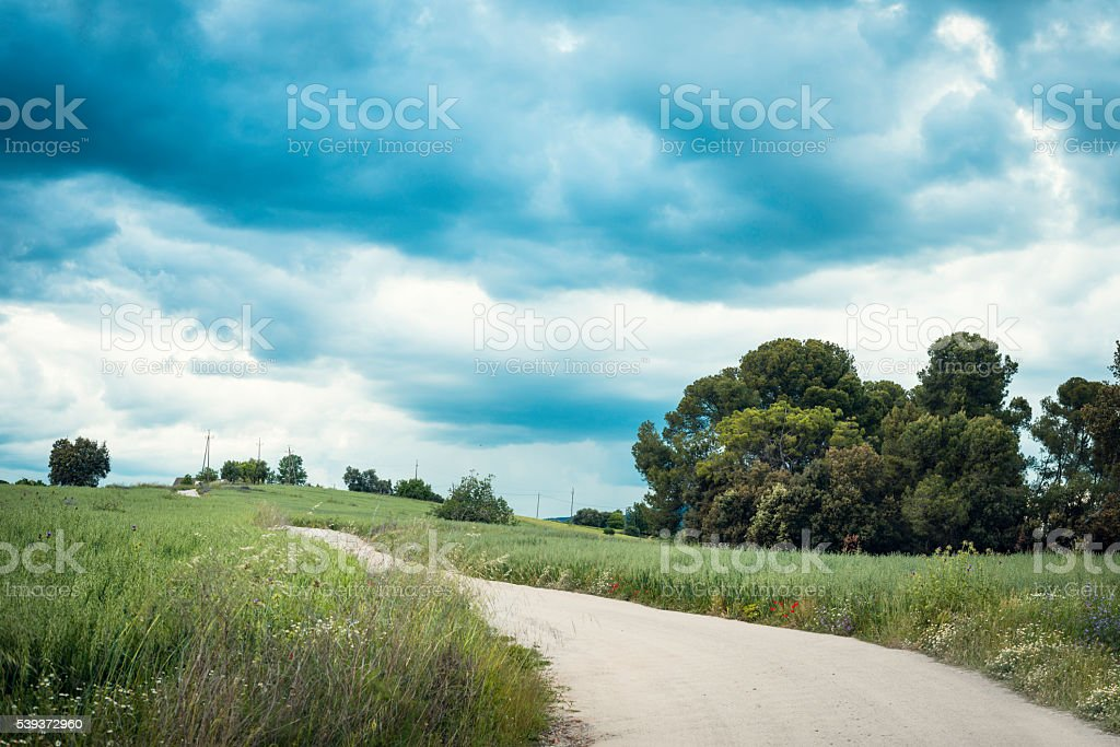 Primavera stock photo