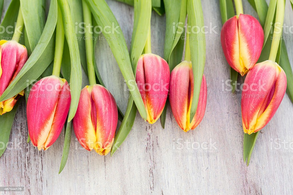Spring Pink and Yellow Tulips on White Wood Table stock photo