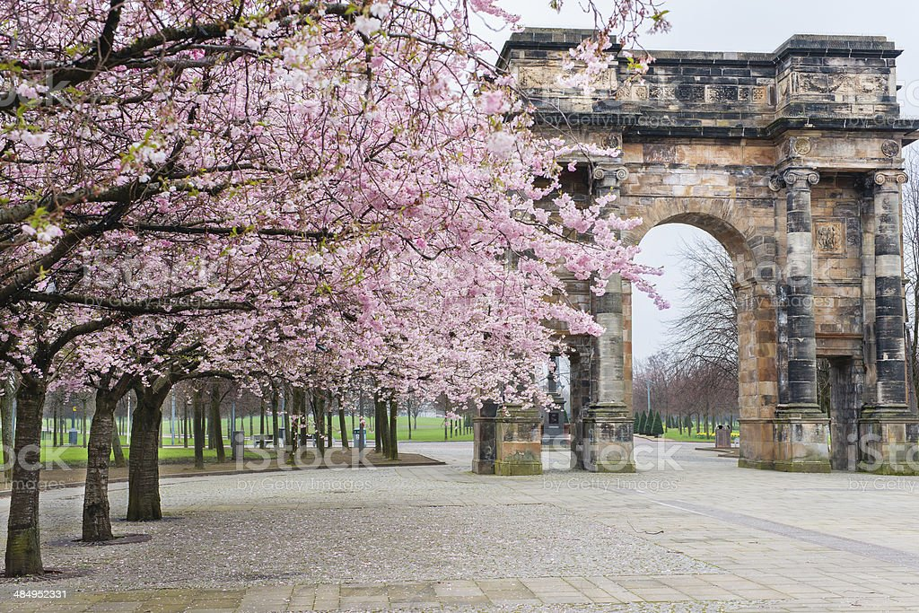 Spring pink trees outside Glasgow Green stock photo