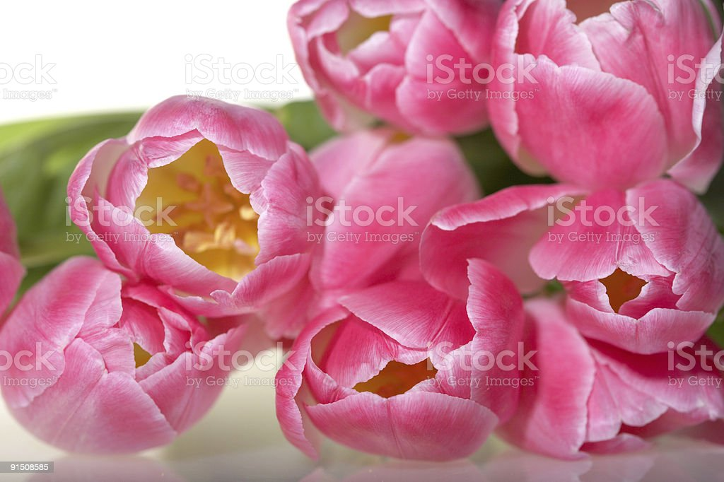 Spring pink Tulips bouquet royalty-free stock photo