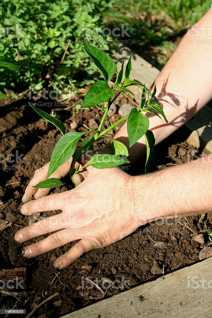 spring plant gardening royalty-free stock photo