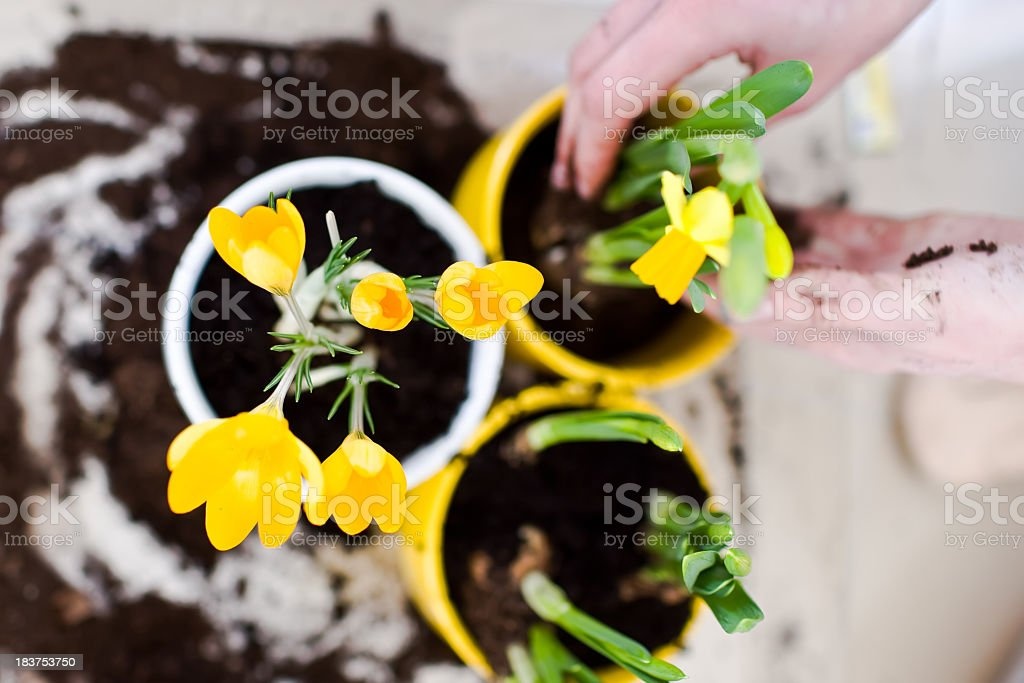 Spring planting flowers royalty-free stock photo