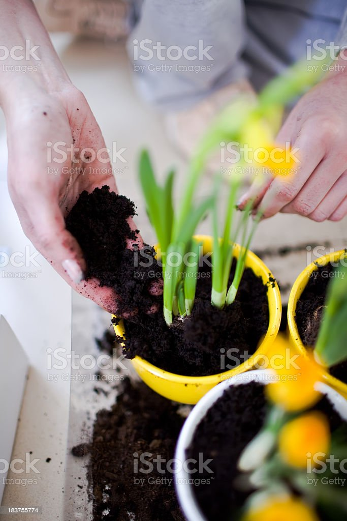Spring planting flowers stock photo