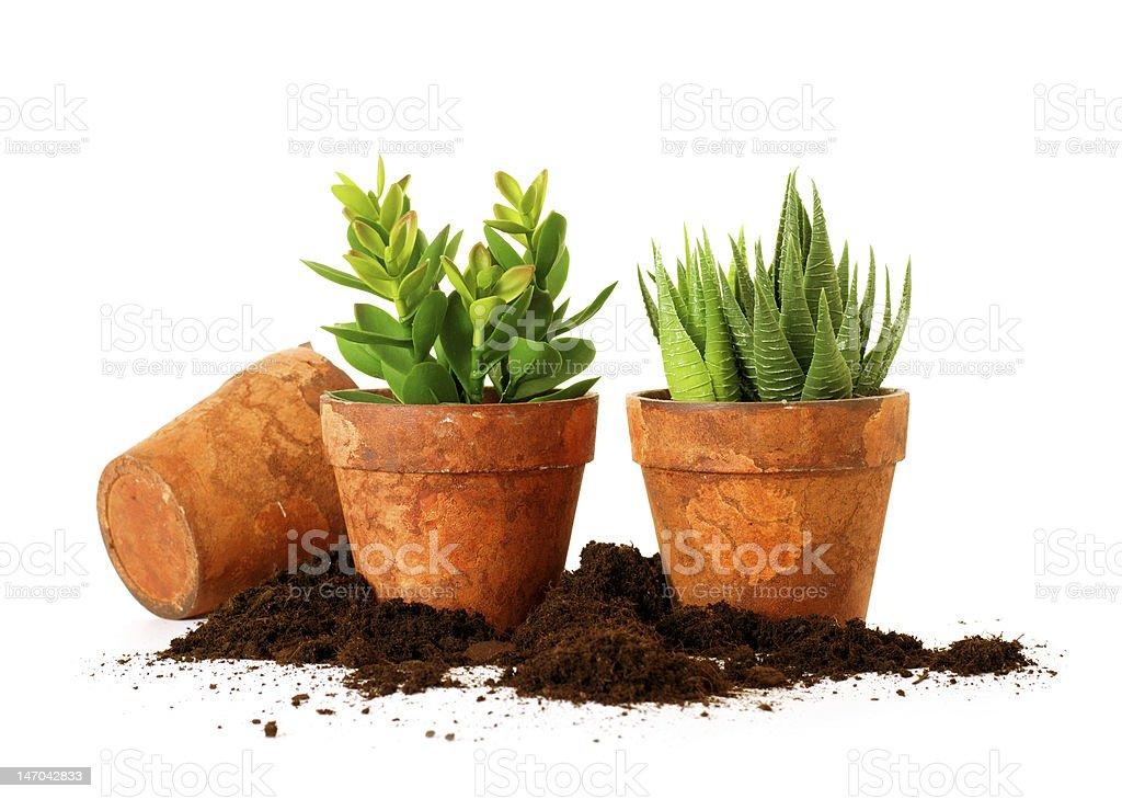 spring planting royalty-free stock photo