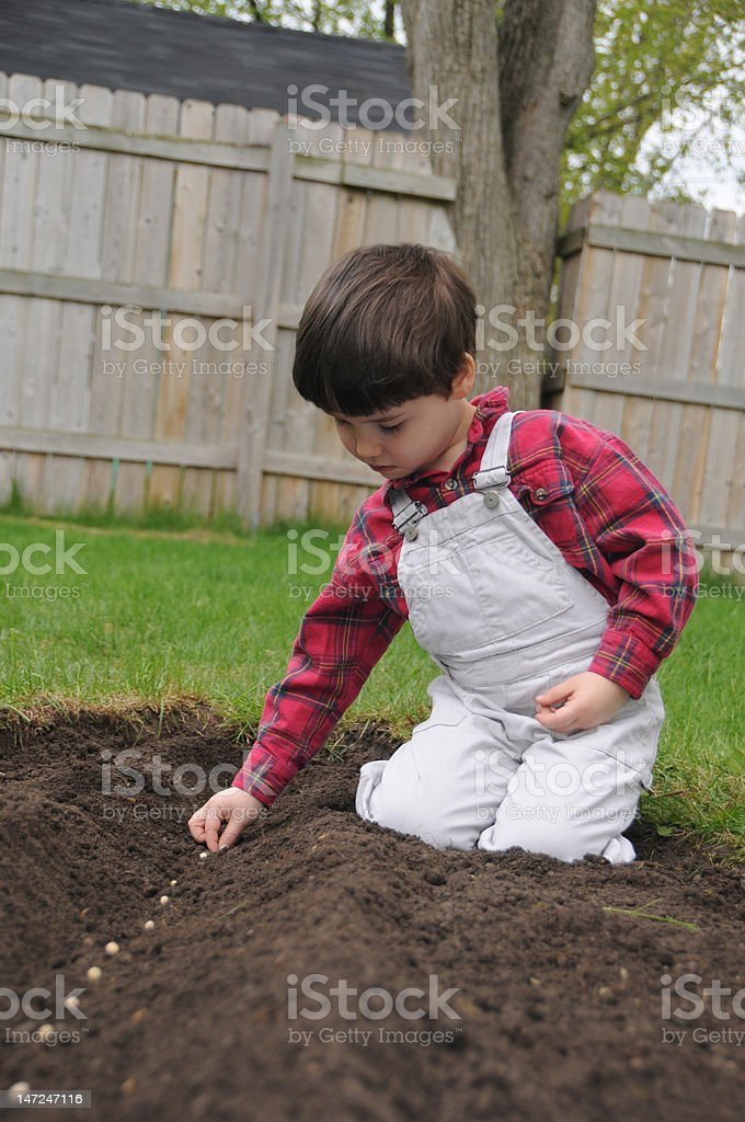 Spring planting royalty-free stock photo