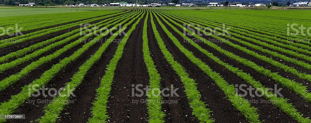 spring planting stock photo