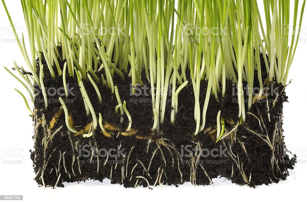 spring plants royalty-free stock photo