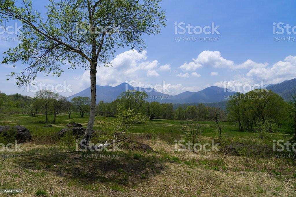 Spring plateau stock photo