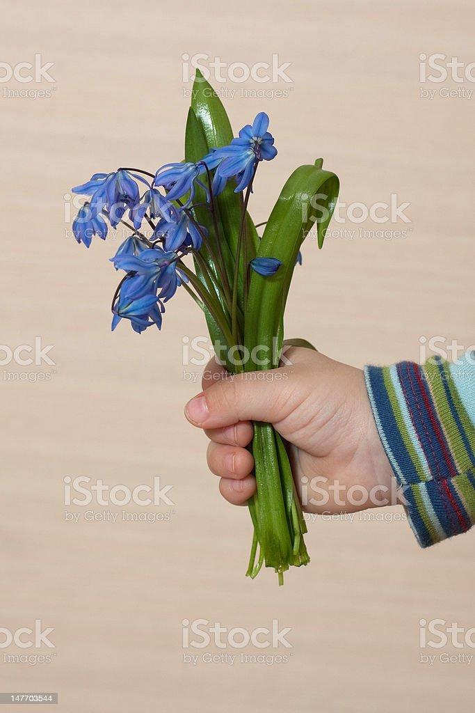 Spring present royalty-free stock photo