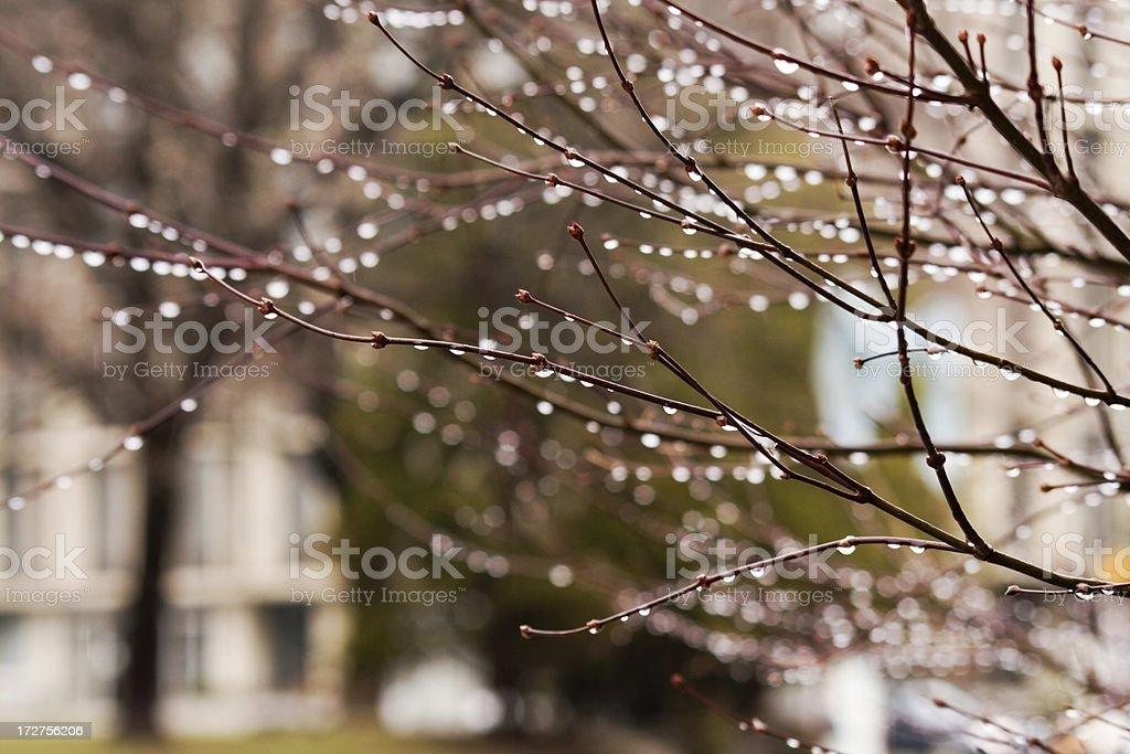 Spring Rain royalty-free stock photo