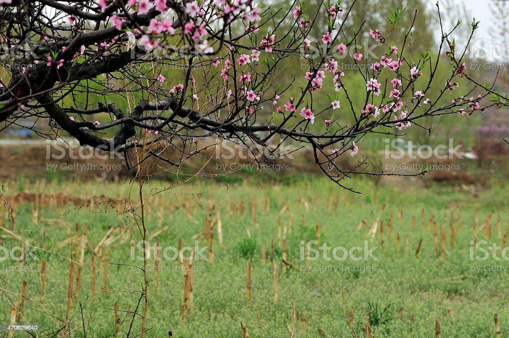 Spring rain stock photo