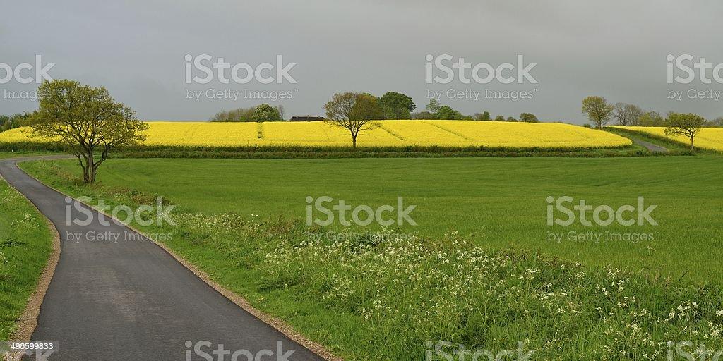 Spring Rape Field royalty-free stock photo