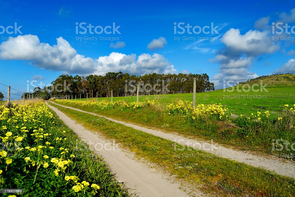 Spring road royalty-free stock photo