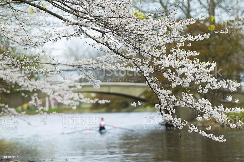 Spring Rowing royalty-free stock photo