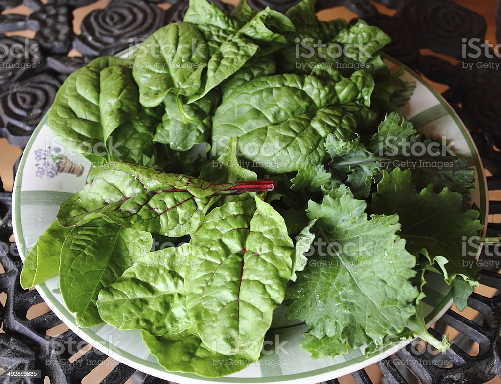 Spring Salad Greens stock photo