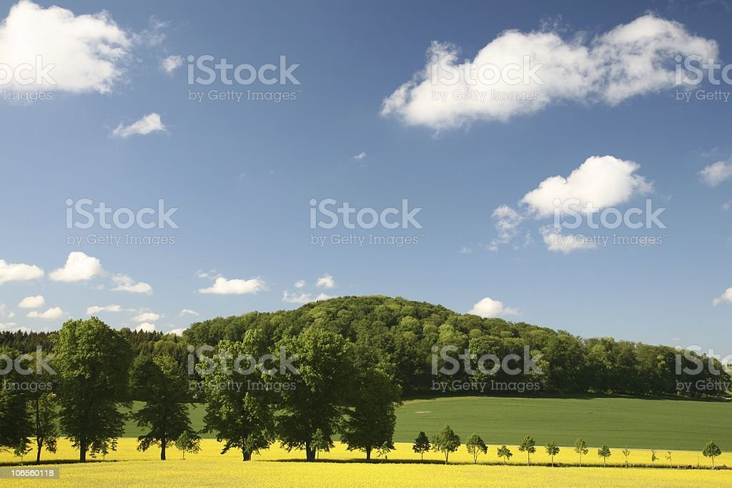 Spring Scence with Rapeseed Field stock photo