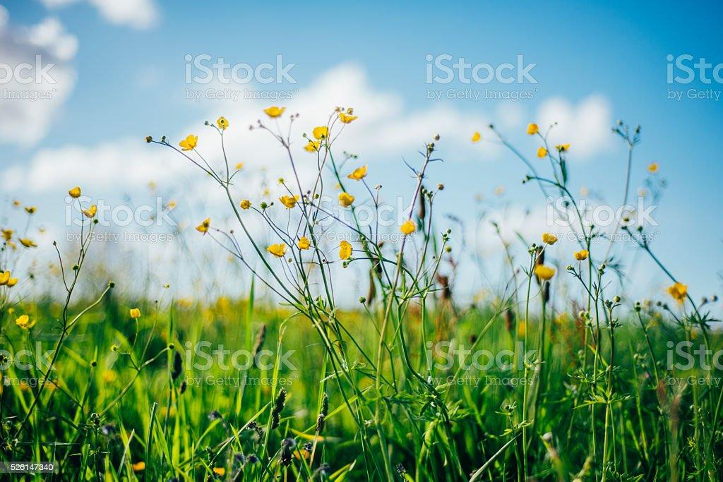 Spring scene stock photo