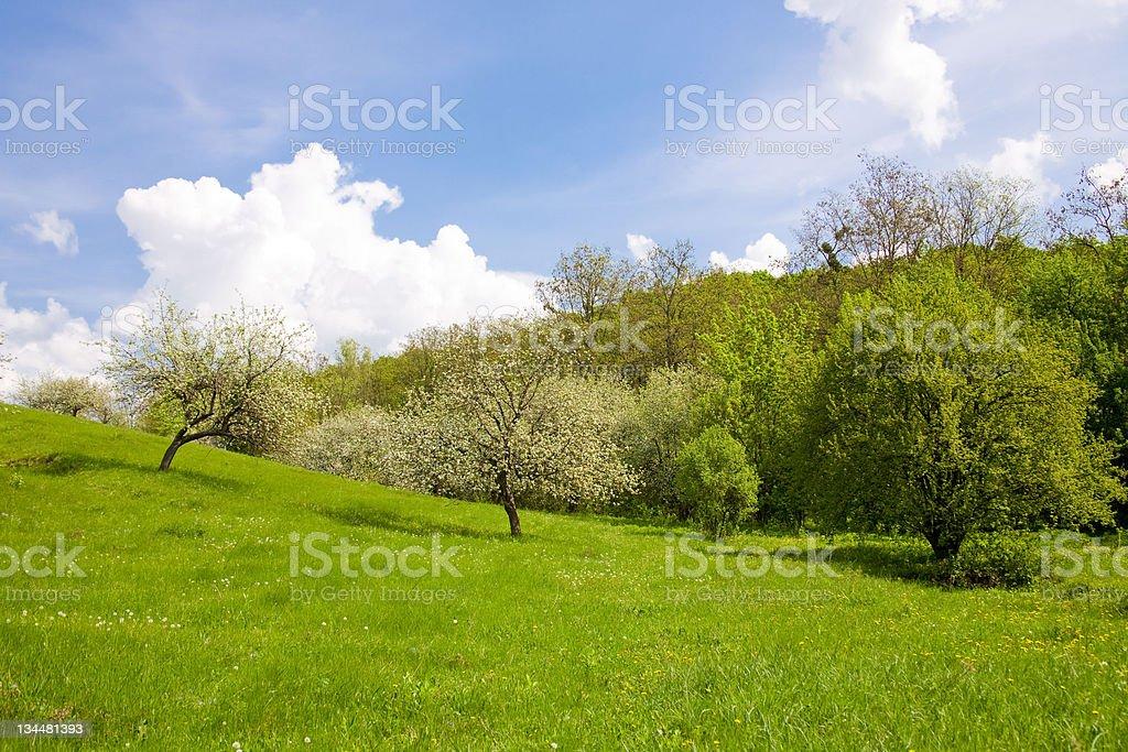 Spring scenery stock photo