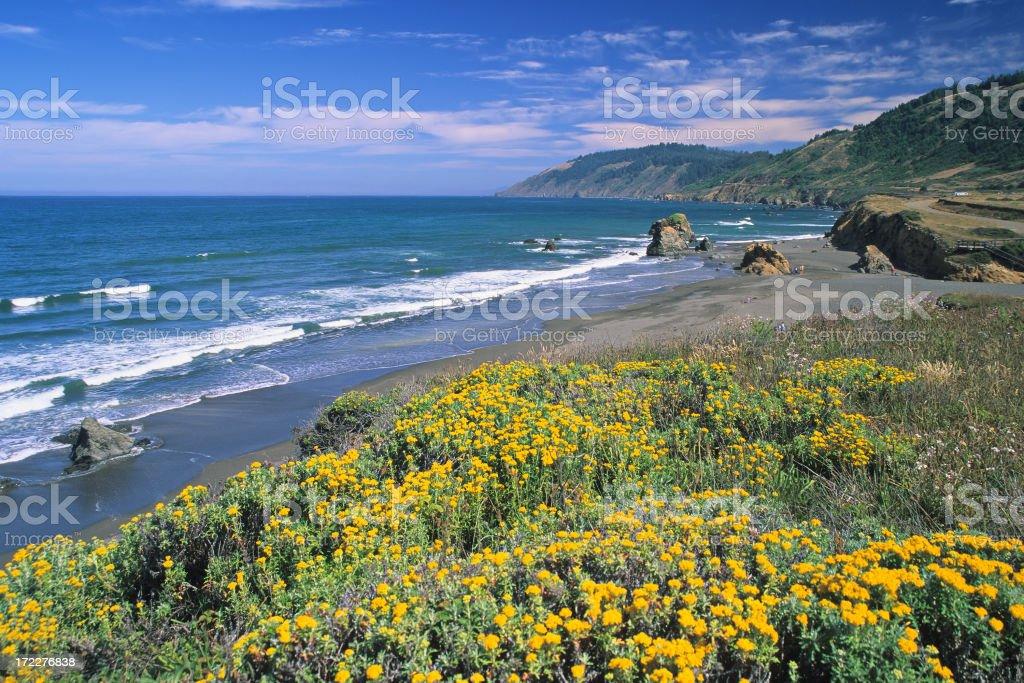 Spring Seascape stock photo