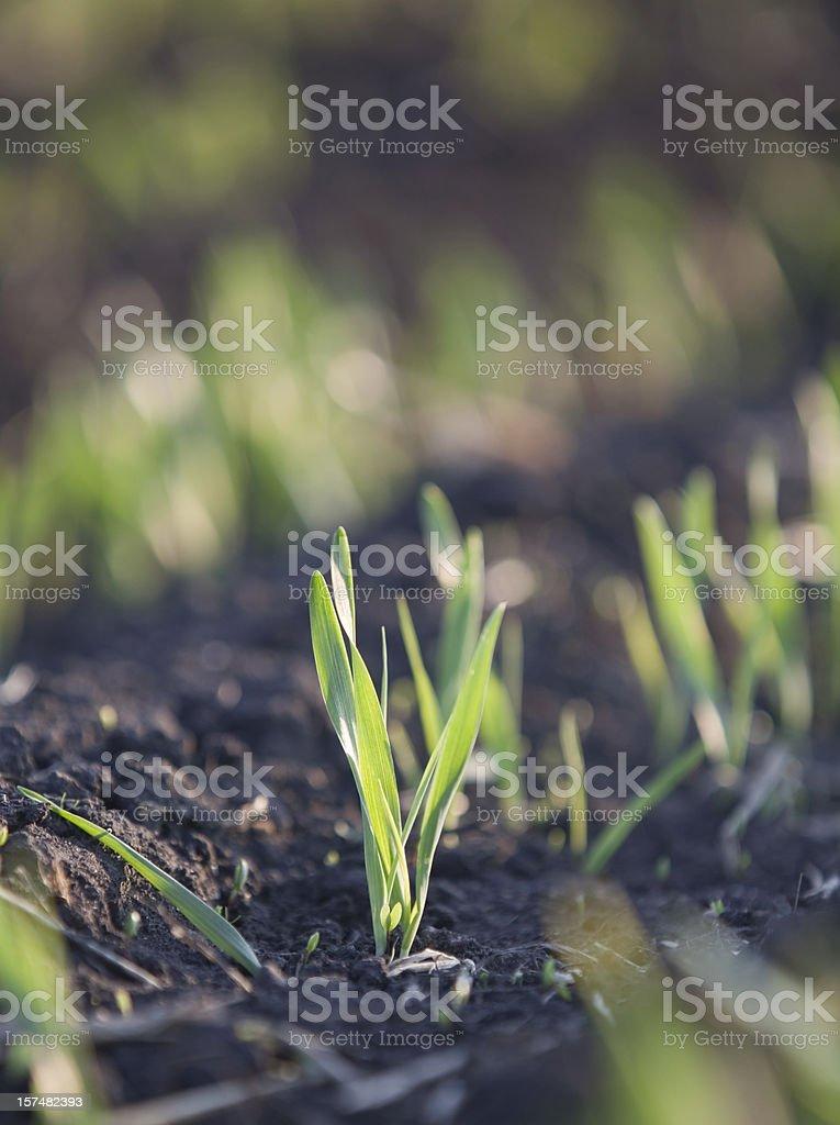 Spring seedling stock photo