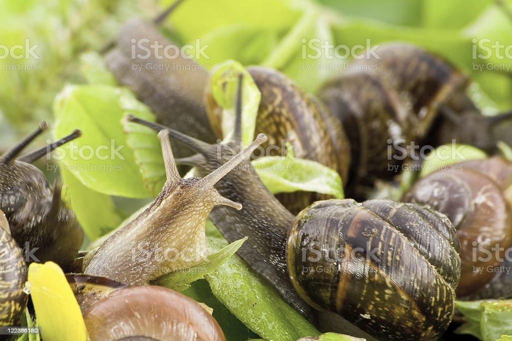 Spring snails background stock photo