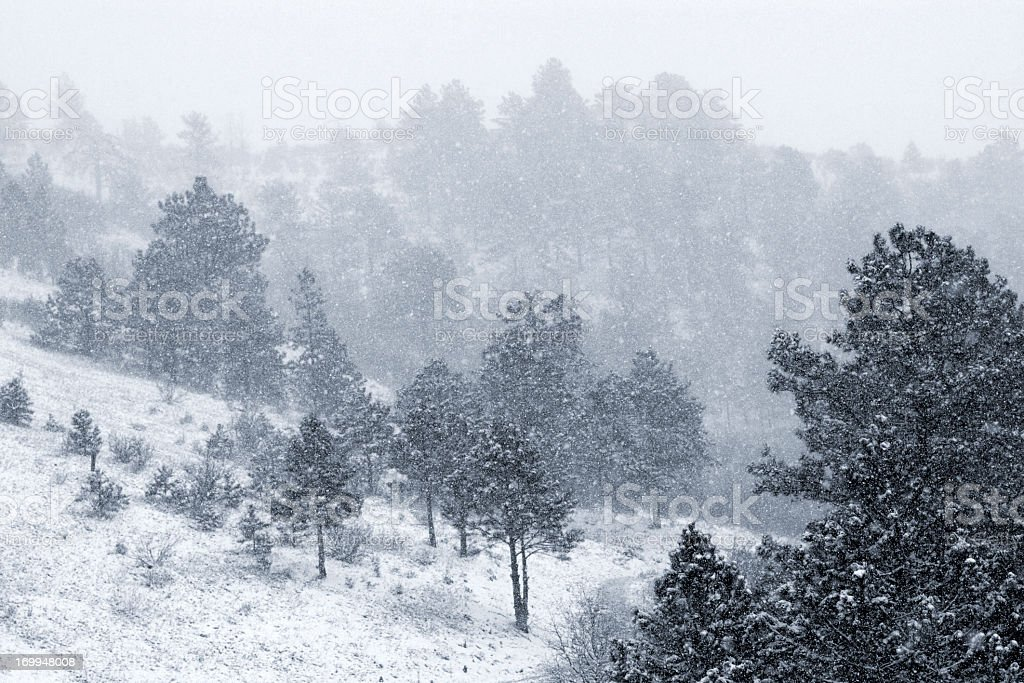 Spring Snow in the Pike National Forest Colorado royalty-free stock photo