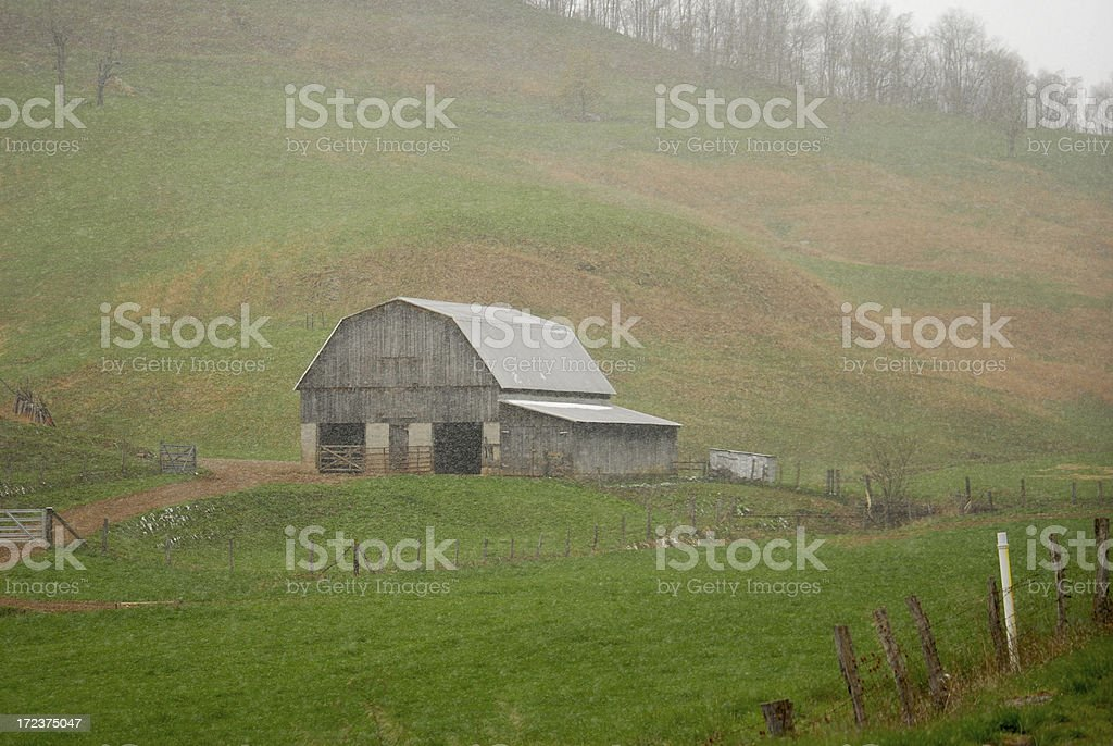 spring snow shower royalty-free stock photo